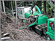 Recolha de desperdicios florestais para central de biomassa