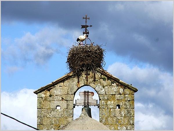 Ninho de cegonhas na torre sineira no Sabugal - capeiaarraiana.pt