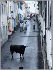Vaca das Cordas dos Açores