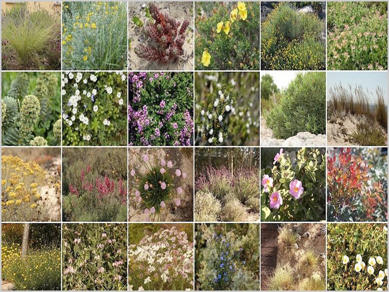 Plantas autóctones para jardins