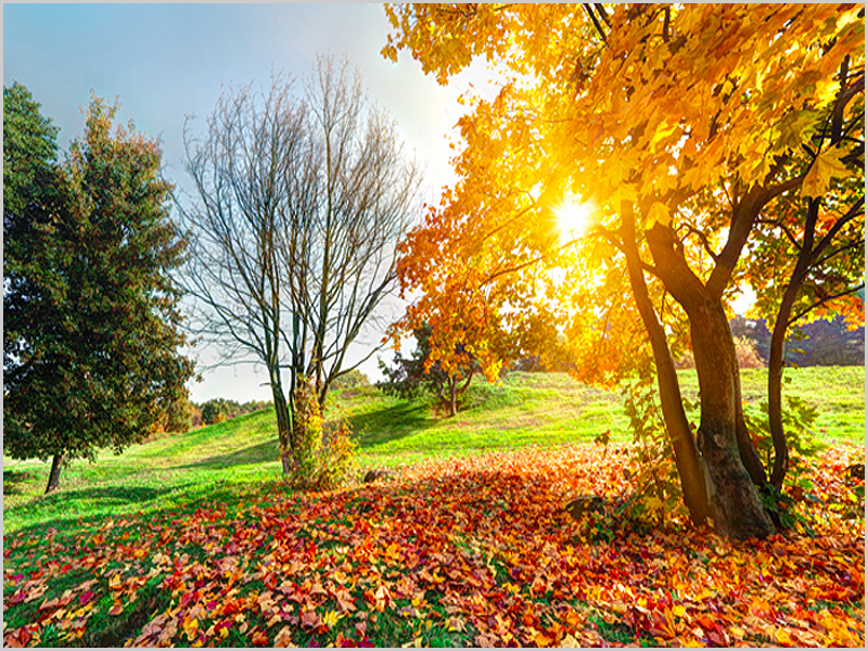 Outono nas nossas terras - capeiaarraiana.pt