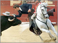 Cavalo e Touro