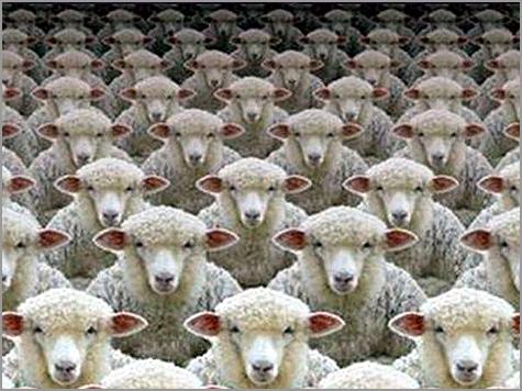 Cartoon sobre a clonagem de ovelhas