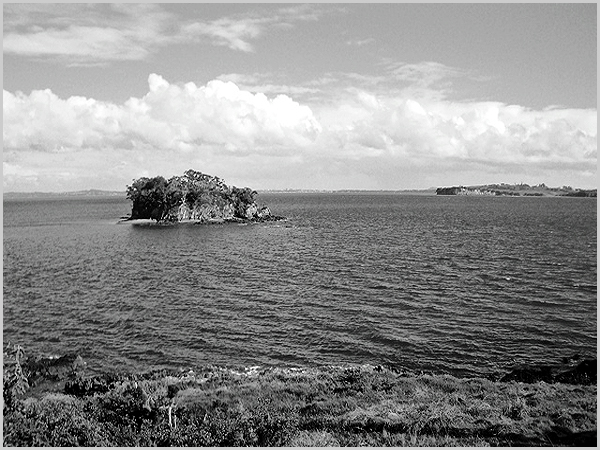 Os náufragos de Auckland