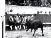 Origens do Forcão - Adérito Tavares - Capeia Arraiana