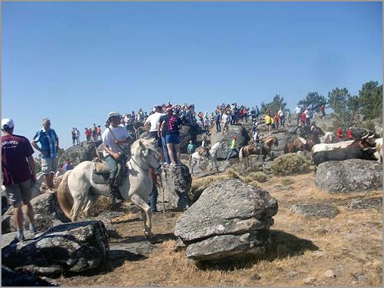 Encerro 2013 nos Fóios - Sabugal - Capeia Arraiana