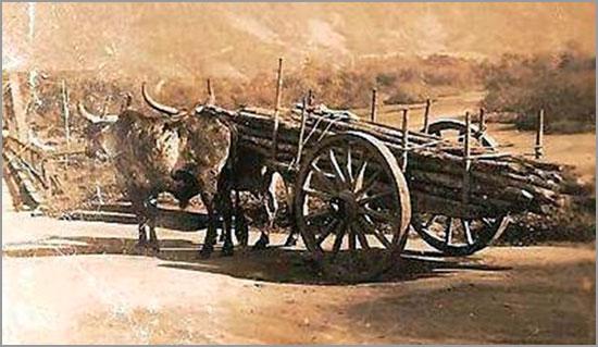 Carro de vacas - Casteleiro - Sabugal - Capeia Arraiana