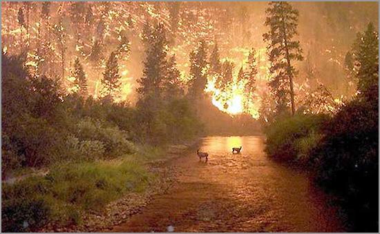 Animais em fuga durante um incêndio