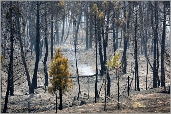 As árvores não podem fugir por isso são destruídas pelo fogo