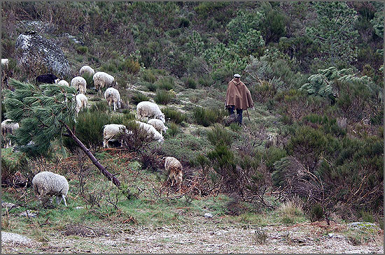 O pastor com a sua peara
