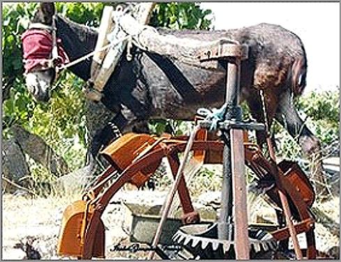 Burro na Roda do Poço - Joaquim Gouveia - Capeia Arraiana