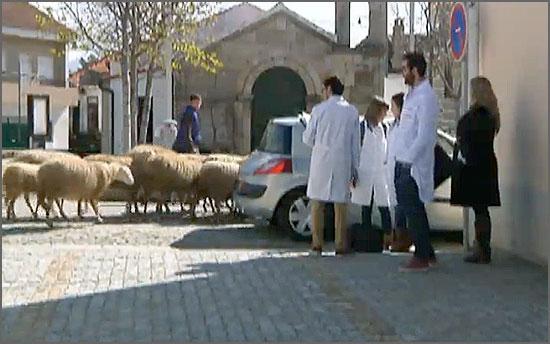 O estudo foi realizado no Casteleiro no início do ano