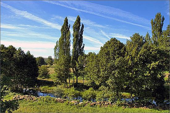 Árvores nas margens do rio Côa