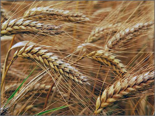 Santo Amaro foi sempre terra de muita agricultura
