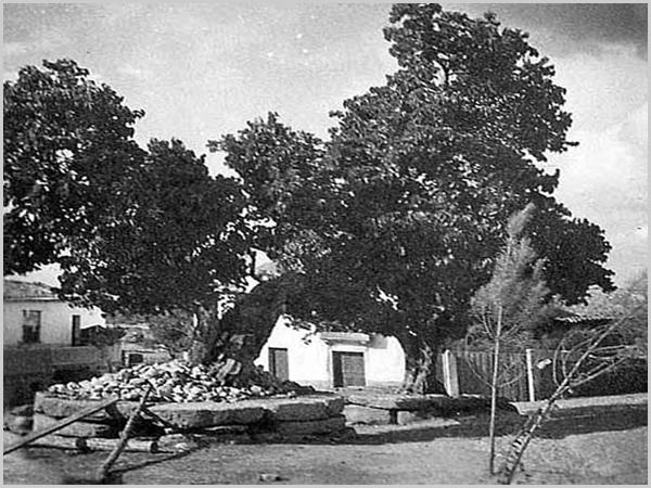 Largo do Mercado da Bismula