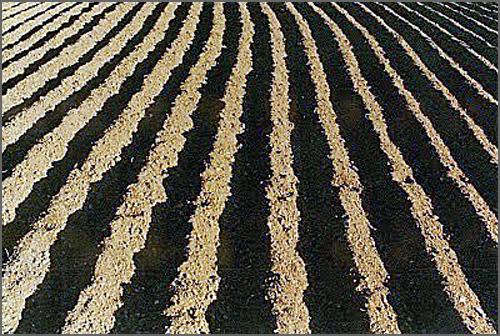 O lavrar grosso do arado