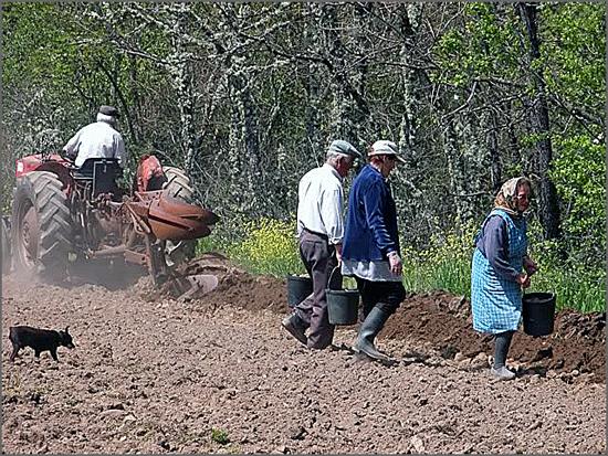 Estão abertas candidaturas a investimentos na exploração agrícola