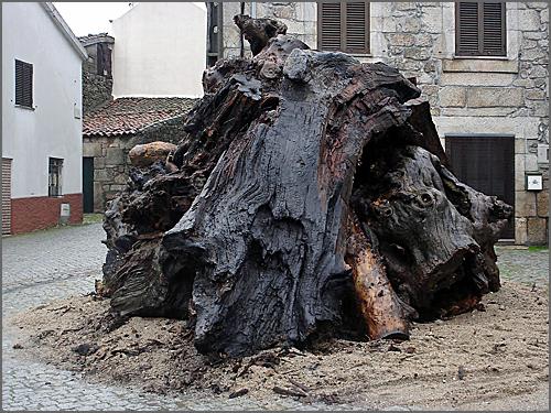 O madeiro na Praça