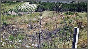 Terrenos de minério