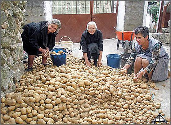 Os pequenos agricultores enfrentam uma fiscalidade voraz