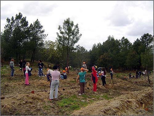 Jovens plantam árvores para repor as destruídas
