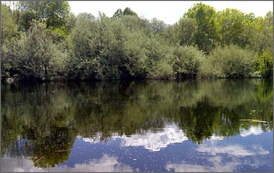 Salgueiros junto ao rio Coa