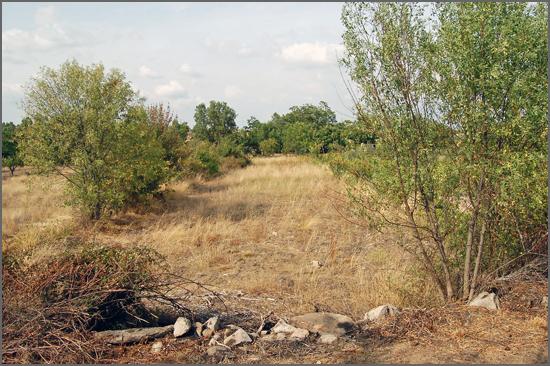 Muitos terrenos agrícolas estão abandonados