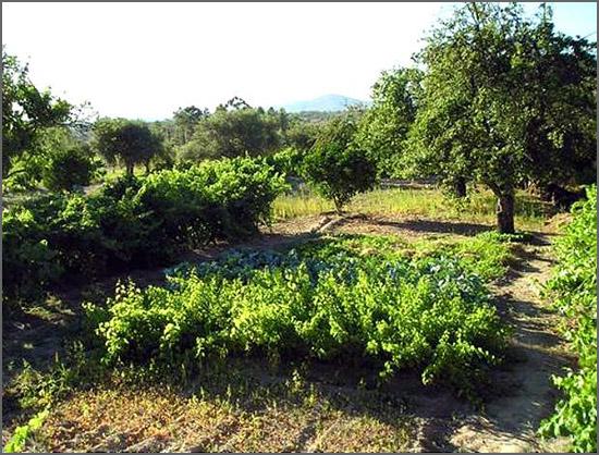 O Município pode assumir um papel decisivo no setor agrícola
