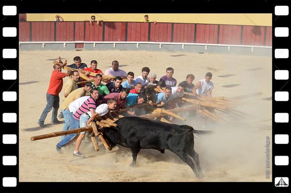 XXXVI Capeia Arraiana - Casa do Concelho do Sabugal - Vila Franca de Xira - PhotoDestaque - Capeia Arraiana