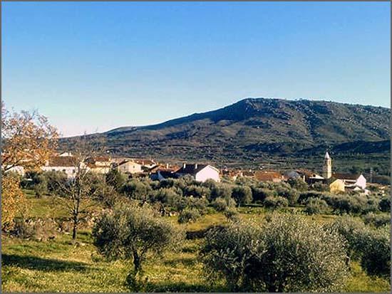 Olival tradicional: paisagem abundante no Casteleiro