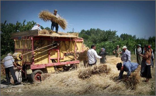 Máquina de malhar o pão (trigo e centeio)