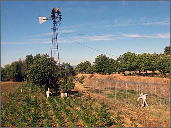 A Estação Agrária do Sabugal pode nascer nos terrenos municipais da Colónia