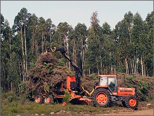 A biomassa florestal pode ser uma alternativa energética