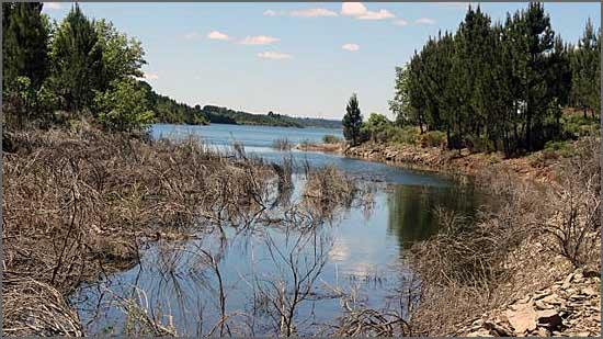 O homem amarrou-se a árvore perto da barragem do Sabugal