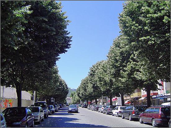 Fundão - Avenida da Liberdade