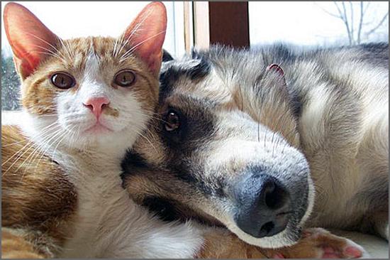 Os direitos dos animais têm mais expressão