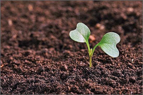 Apoiar novos projectos agrícolas
