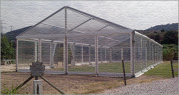 Tendas Transparentes para Eventos - Capeia Arraiana