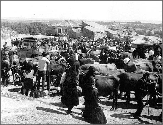 Mercado das vacas