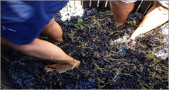 Vinho do Casteleiro é afamado - Capeia Arraiana