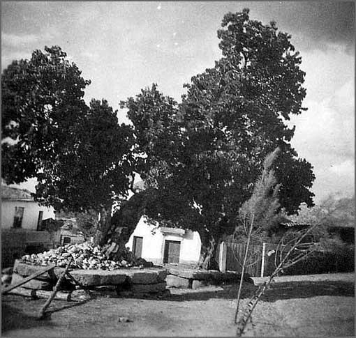 Bismula - amoreiras e seus muros seculares, um património desaparecido