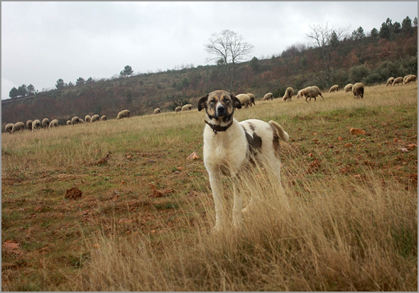 O cão da minha infância chamava-se Tivoli - Capeia Arraiana
