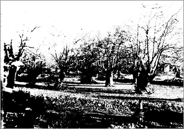 Castanheiros sem folhas no Inverno - Capeia Arraiana