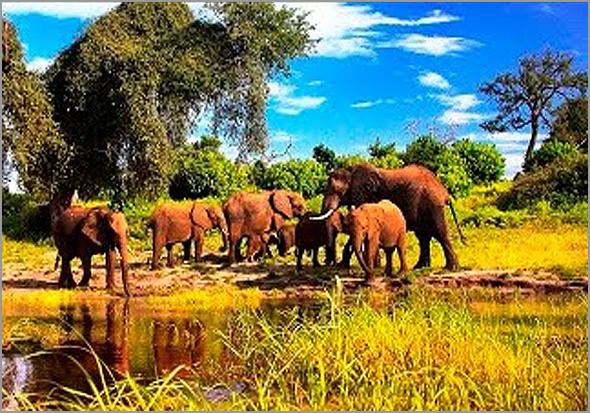 Com a guerra, os humanos estragam este paraíso dos elefantes - José Carlos Mendes - Capeia Arraiana