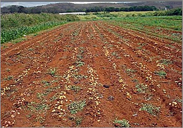 Terrenos de cultivo da Quinta de Santo Amaro no Casteleiro - Capeia Arraiana
