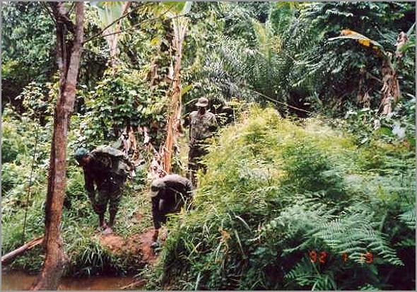 Mata do Maiombe na zona de Buco Zau - Capeia Arraiana
