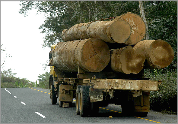 Negócio chorudo da madeira em Angola - Capeia Arraiana