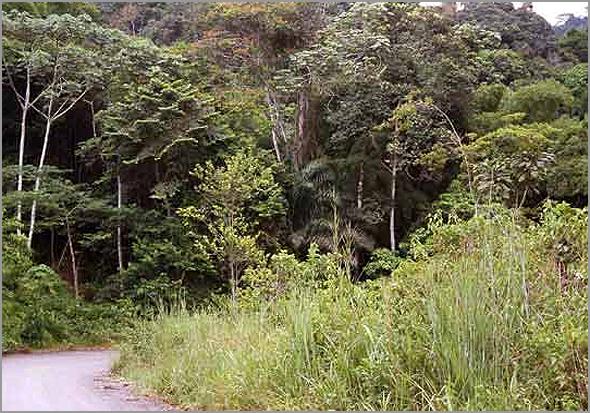 Densa floresta virgem em Angola - capeiaarraiana.pt