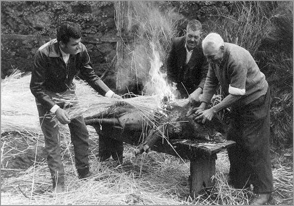 Matança do porco tradicional (foto: D.R.)