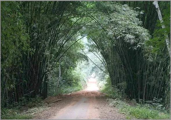 Floresta Virgem do Maiombe - Cabinda - Angola